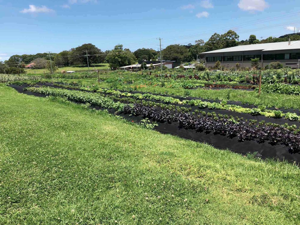 Vegetable Garden The Farm Byron Bay.jpg