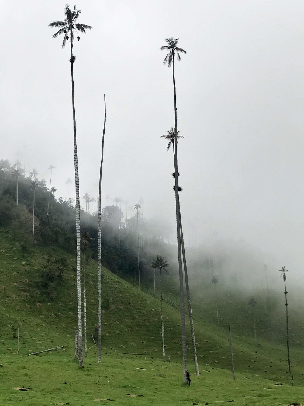 World's Tallest Palm Trees | Hiking Cocora Valley, Colombia