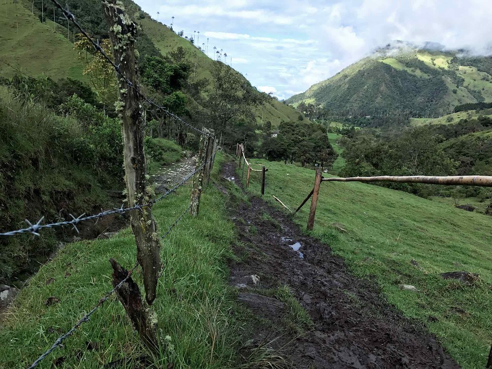 muddy trail | Cocora Valley, Colombia