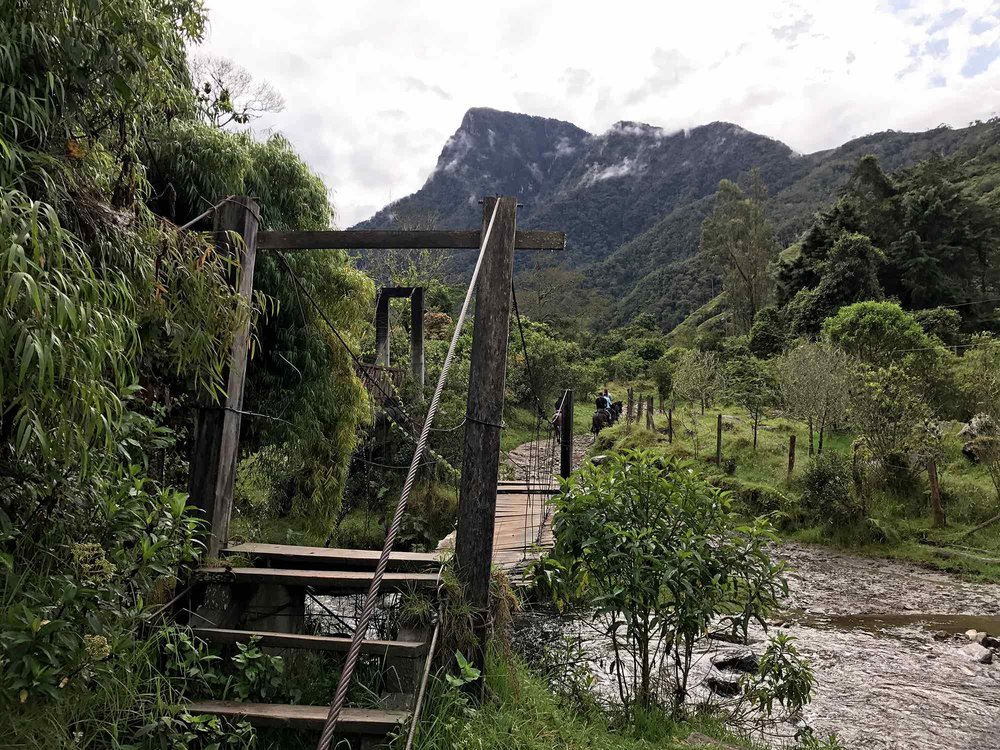 Hiking trail bridge | Cocora Valley, Colombia