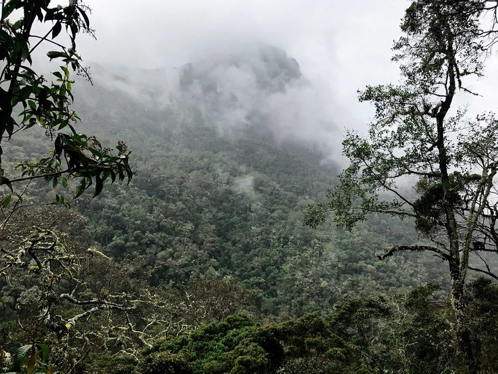 Cloud Forest | Hiking Cocora Valley, Colombia